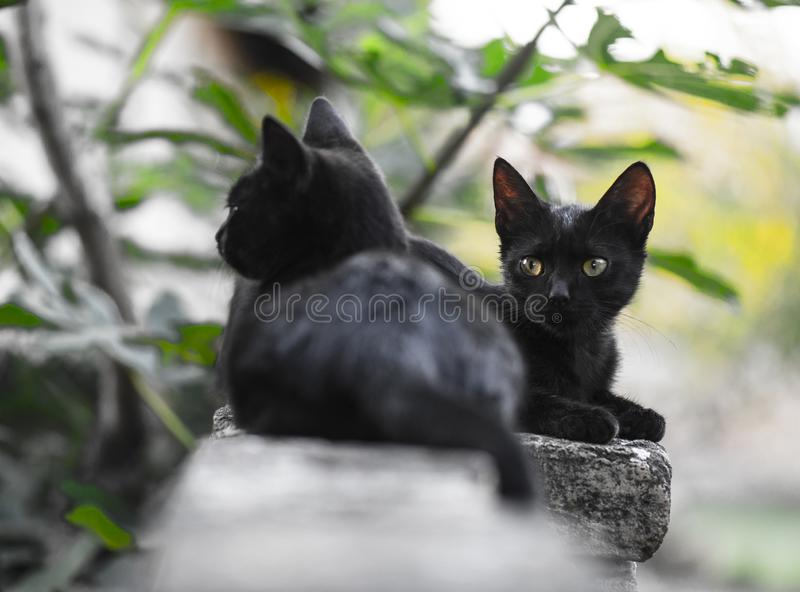 Two little black domestic cats stock photos