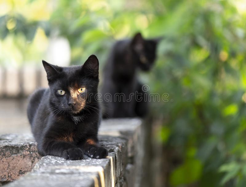 Two little black domestic cats with yellow eyes. Two little black domestic cats stock photo