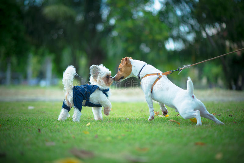 Two little dog stock image