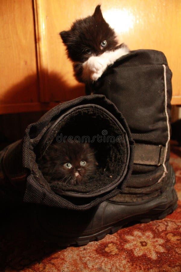 Strange house for kittens royalty free stock photography