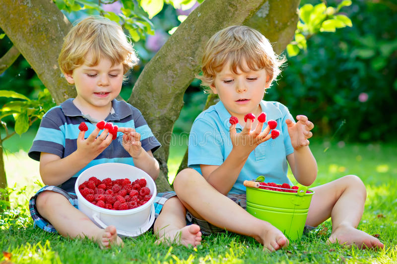 Two little friends, kid boys having fun on raspberry farm in summer royalty free stock images