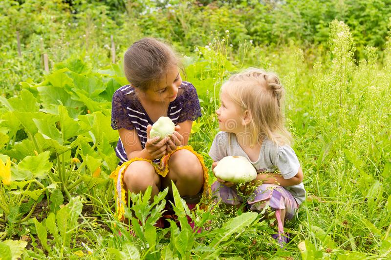 Two little girls in a garden harvesting squashes. They are sitting on a green grass and looking at each other royalty free stock images