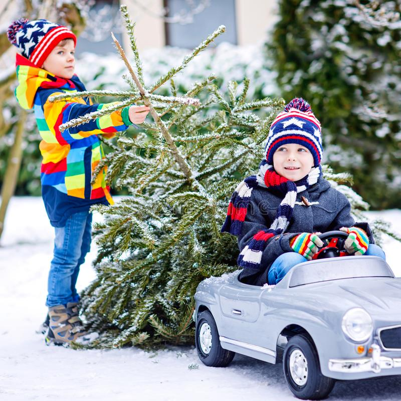 Two little kid boys driving toy car with Christmas tree. Happy children, siblings, twins, friends in winter fashion royalty free stock image