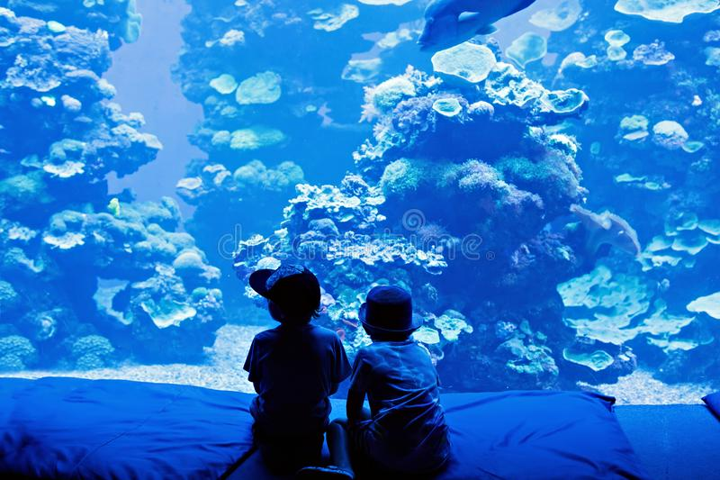 Two little kid boys observing penguins in a recreation area. Two little kid boys observing fishes in a recreation area aquarium. Cute siblings, preschool royalty free stock photo