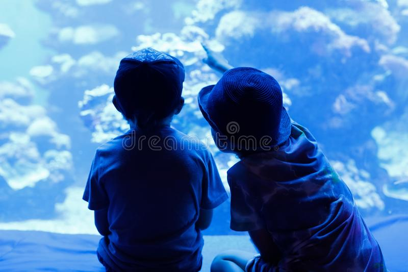 Two little kid boys observing penguins in a recreation area. Two little kid boys observing fishes in a recreation area aquarium. Cute siblings, preschool stock photography