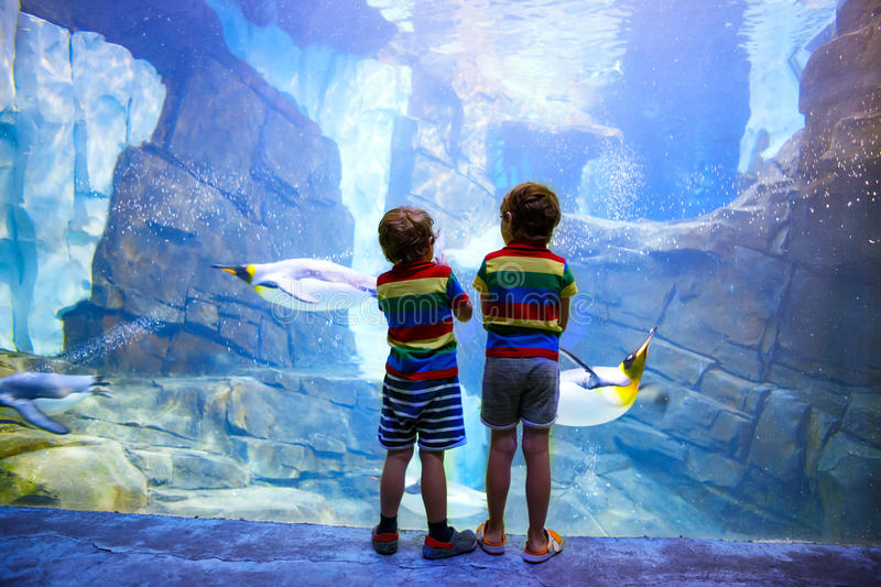 Two little kid boys observing penguins in a recreation area. Cute siblings, preschool children having fun with watching animal life stock photography
