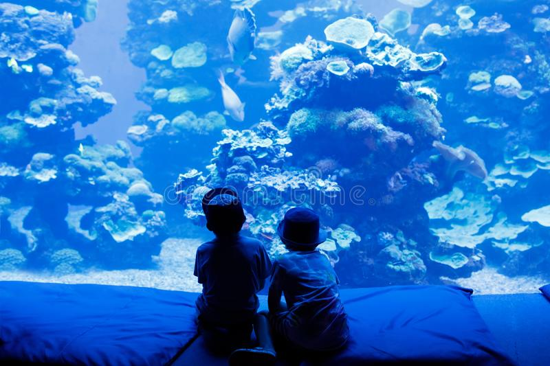 Two little kid boys observing penguins in a recreation area. Two little kid boys observing fishes in a recreation area aquarium. Cute siblings, preschool royalty free stock photos