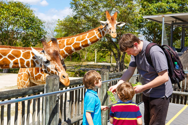 Two little kids boys and father watching and feeding giraffe in royalty free stock images