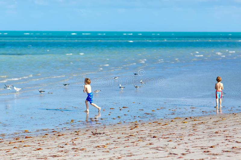 Two little kids boys having fun on tropical beach, happy best friends playing with sand, friendship concept. Siblings. Brothes in swim trousers hunting seagulls royalty free stock images