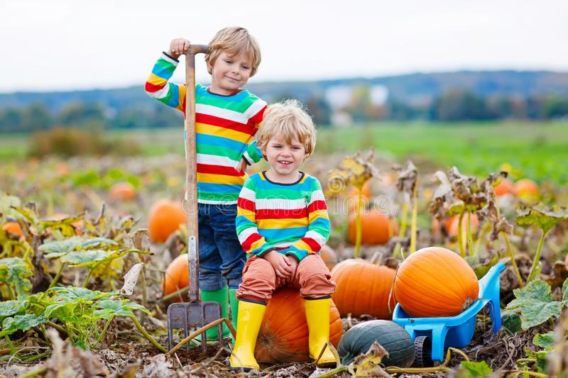 Two little kids boys picking pumpkins on Halloween or Thanksgiving pumpkin patch royalty free stock photos