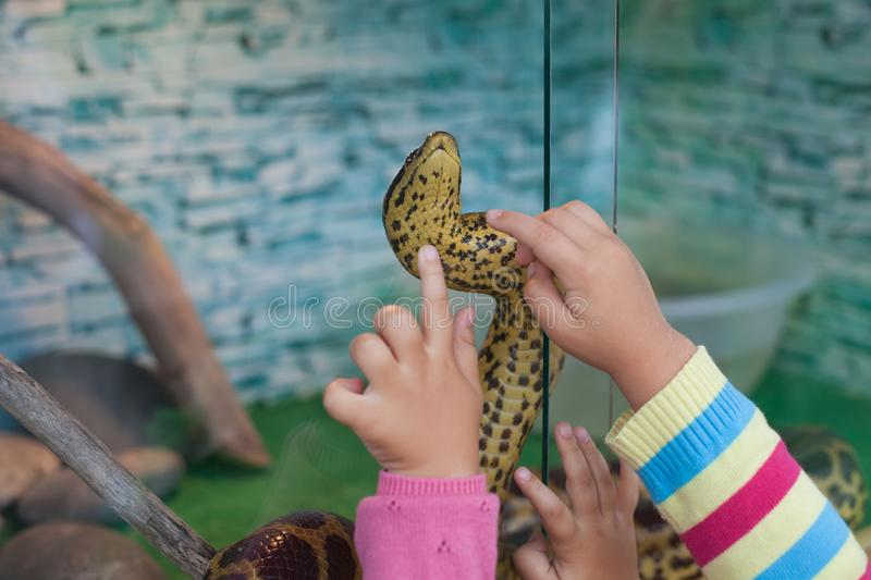 Exotic zoo, little kids looking at snake. royalty free stock image