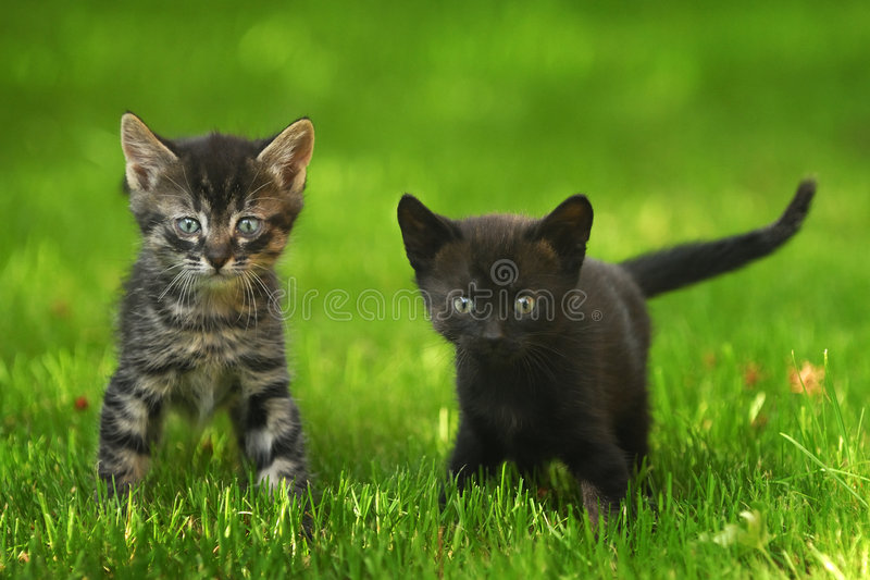 Two little kittens. Two little kittens sitting outside in the grass