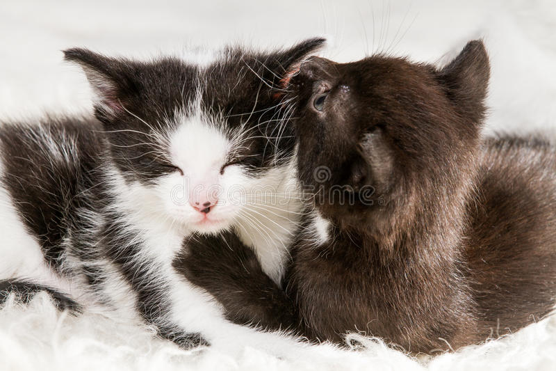 Two little kittens lying on a blanket stock photo