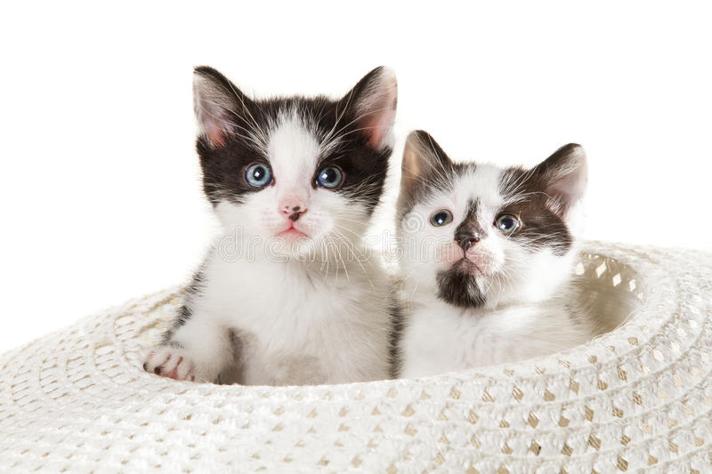 Two little kittens sitting in a hat royalty free stock images