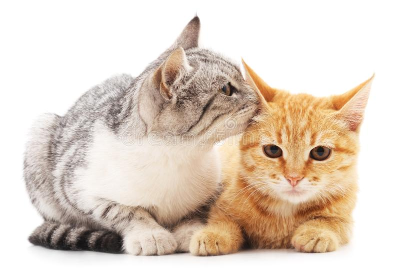 Two little kittens. Two little kittens on a white background royalty free stock photo