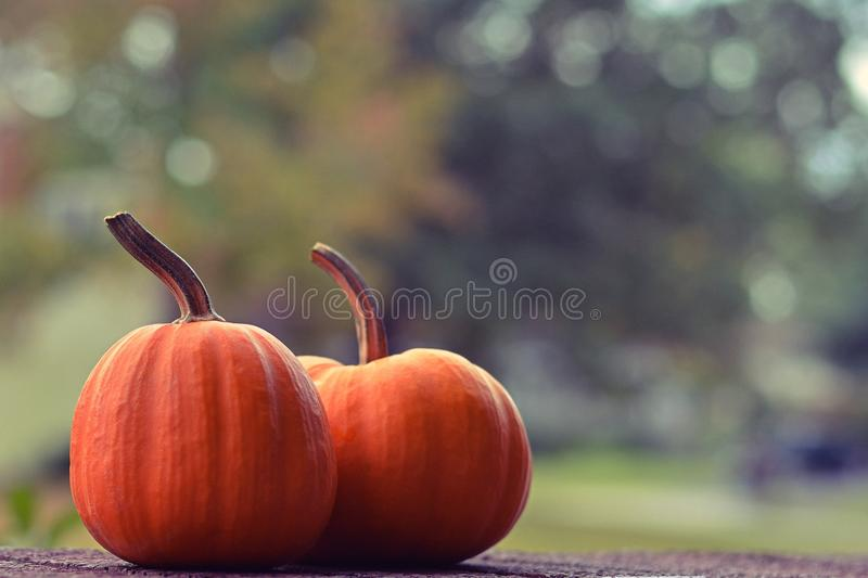 Two little pumpkins royalty free stock image