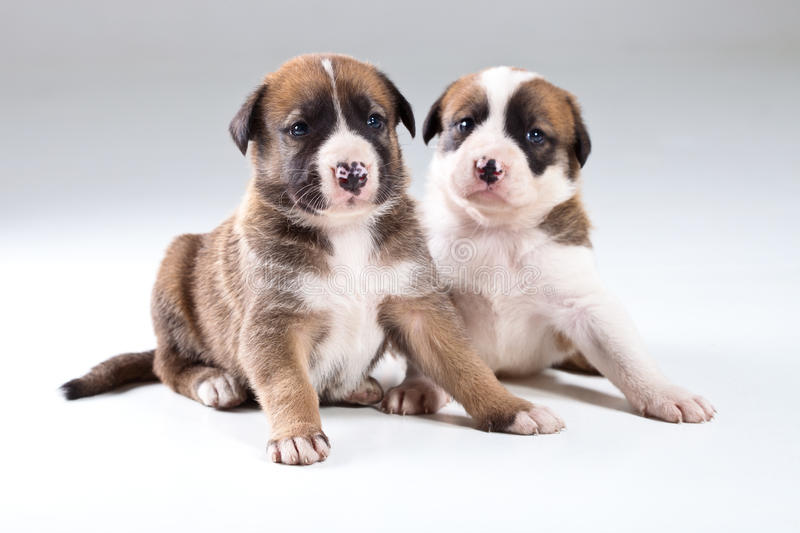 Download Two little puppies stock image. Image of sweet, portrait - 22563977