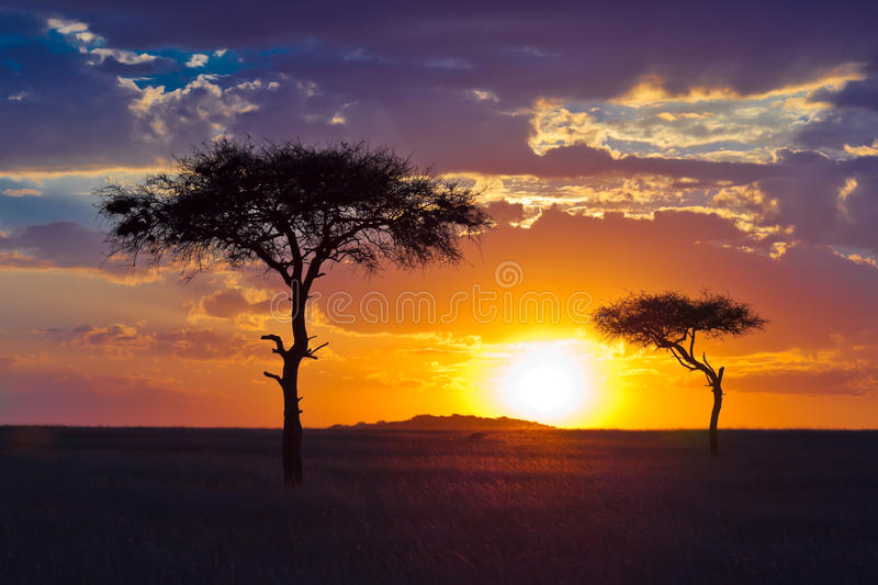 Download Two Lone Tree On A Background Of Tropical Sunset Stock Photography - Image: 15611032