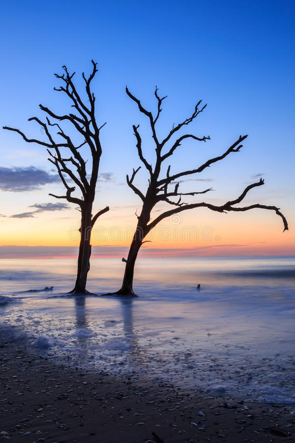 Two Lone Trees in Surf on Beach Edisto Island South Carolina stock image