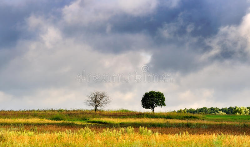 Download Two lonely trees stock photo. Image of foliage, pair - 10342122