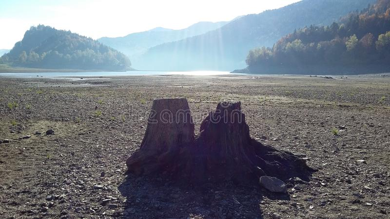 Two Lonely trunks royalty free stock image