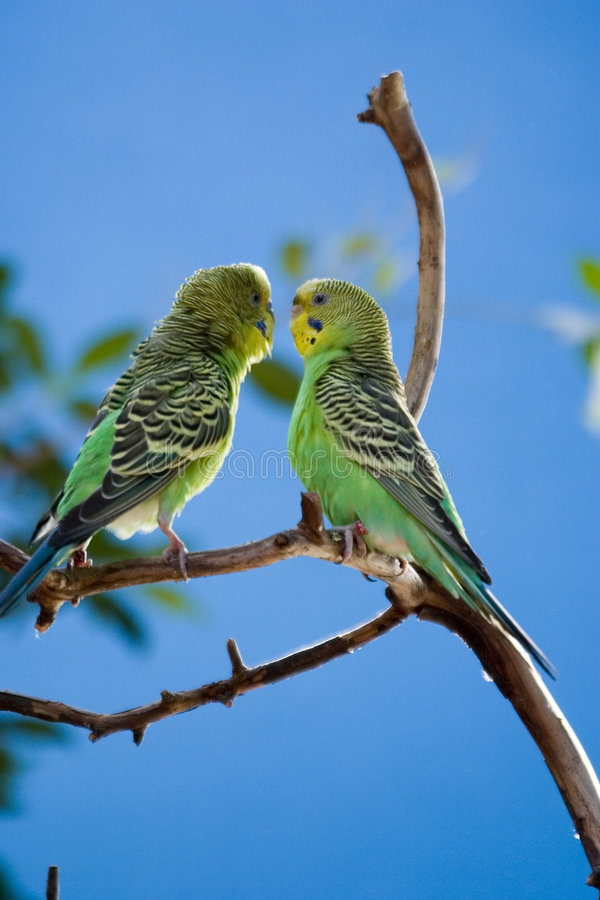 Two love brids royalty free stock photo
