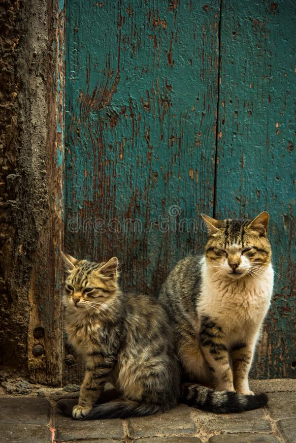 Two lovely cats sitting at fron door in Morocco. Two lovely cats sitting at front door in Morocco stock photos