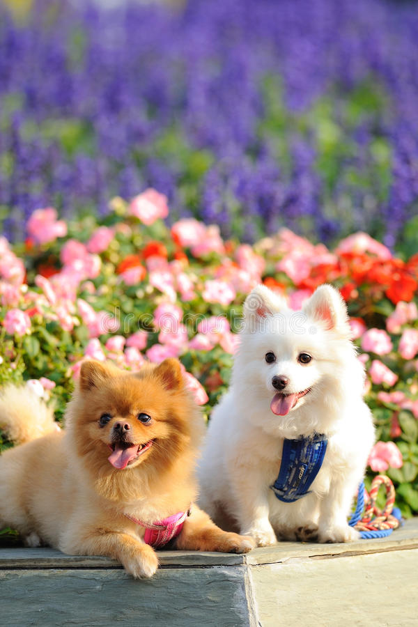 Download Two lovely dogs stock photo. Image of mammal, lovely - 19838454