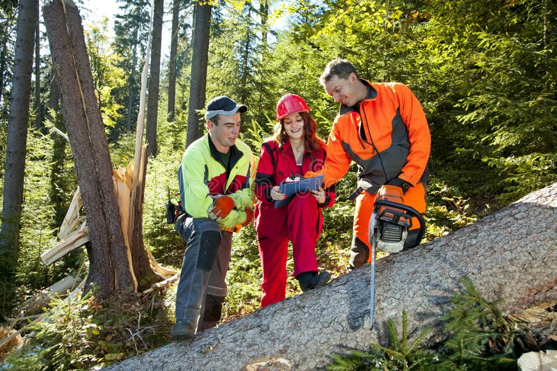 Two lumberjack with chainsaw and young woman. Two lumberjack with chainsaw and young women in work clothes discuss about forest calamity royalty free stock photos