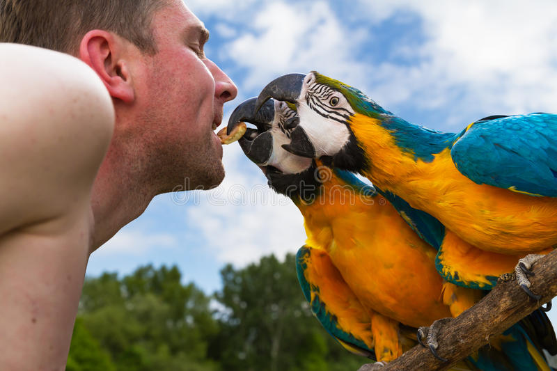 Two macaws and breeder birds royalty free stock images