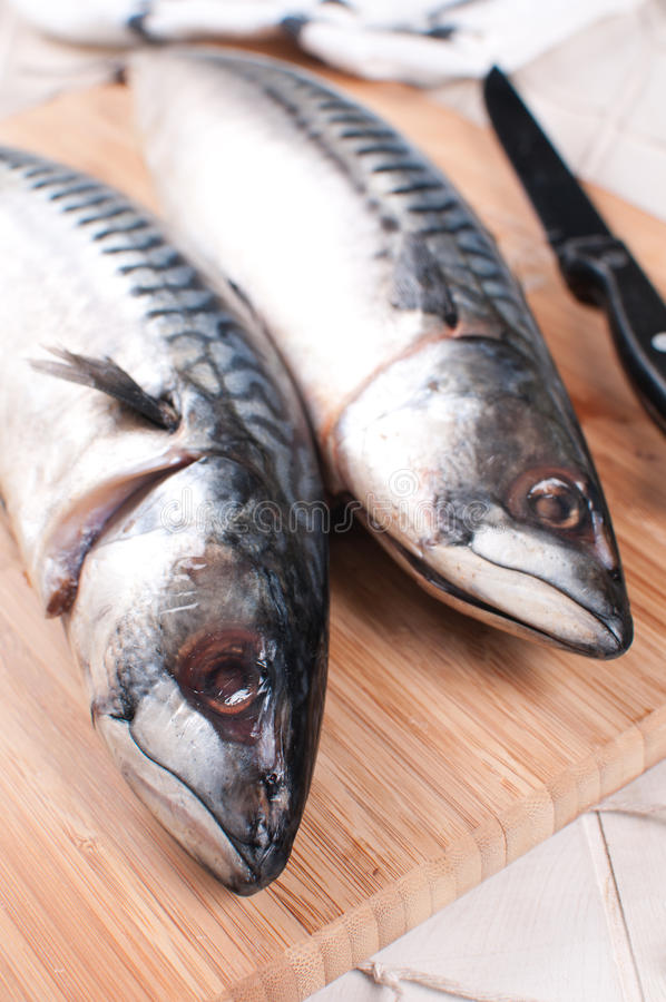 Two Mackerel Raw Fish Heads Closeup Stock Images