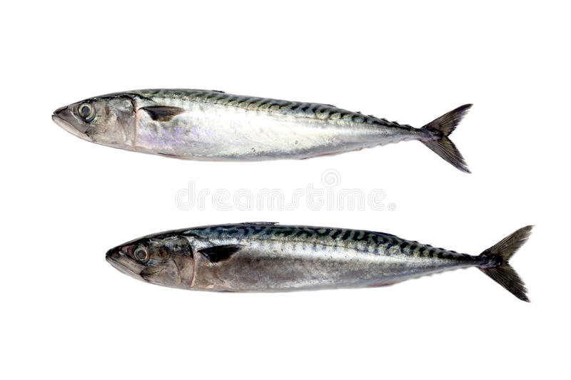 The two mackerel. On a white background closeup royalty free stock images