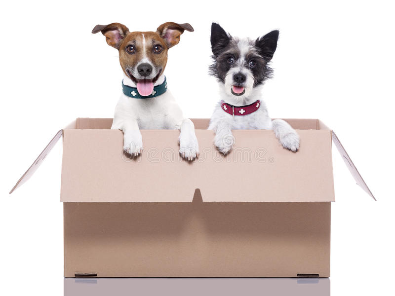 Two mail dogs. In a brown moving box