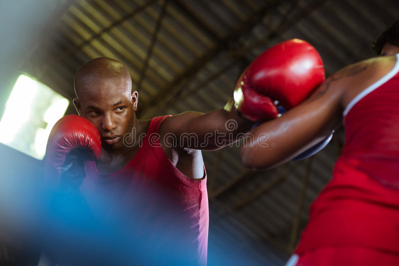 Two male athletes fight in boxing ring royalty free stock images
