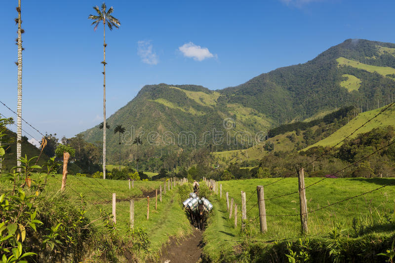 Two man and horses in a trail in the Cocora Valley Valle del Cocora in Colombia, South America royalty free stock photo