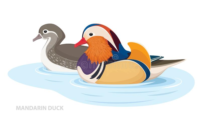 Two Mandarin Ducks swim in the water. Asian Birds. Male and Female. Vector. Illustration vector illustration