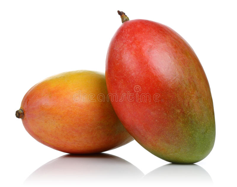Two Mango royalty free stock images