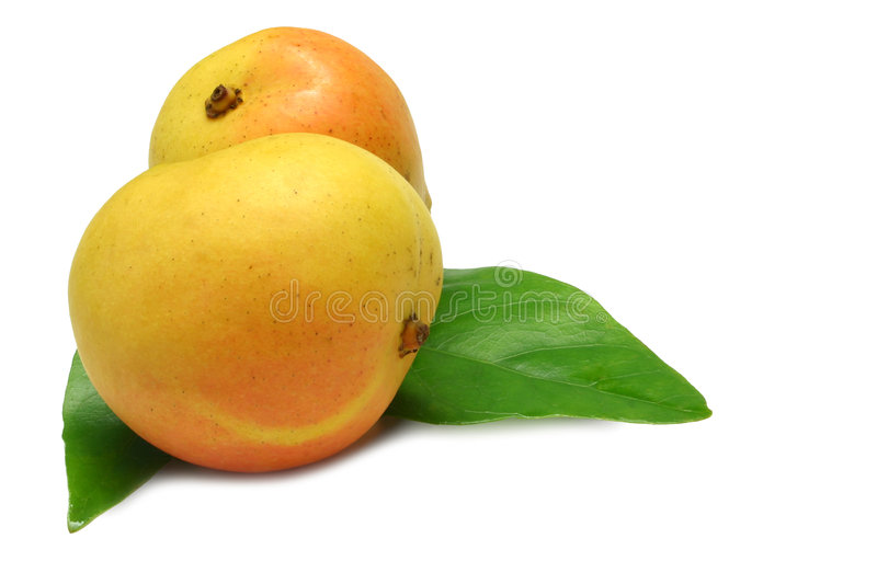 Two Mangoes stock photography