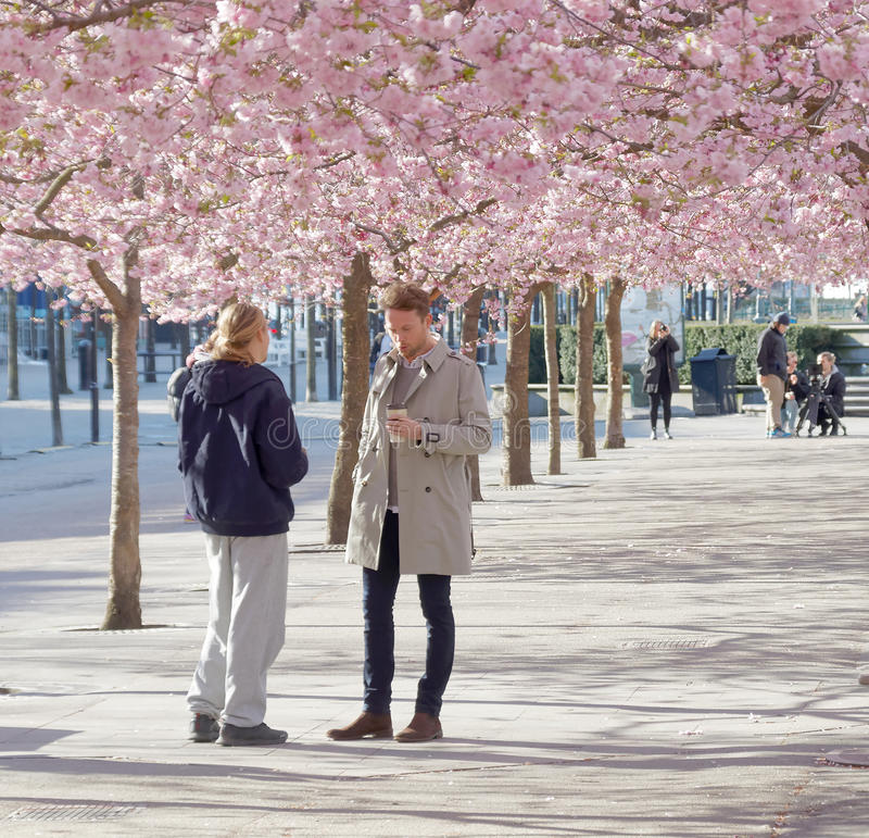 Two men in park with beautiful blooming cherry trees and people royalty free stock images