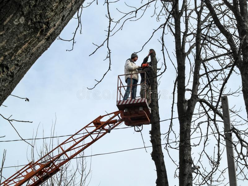 Two men sawing a tall tree with a chainsaw, standing on an aerial platform. Bare tree branches on a blue sky background, stock images
