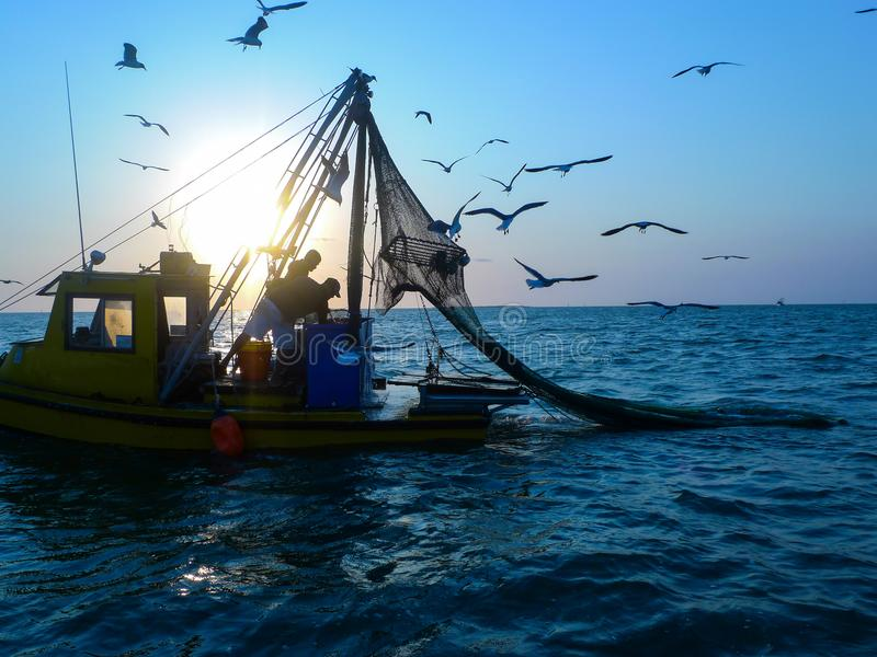 Two men on a shrimp boat with seagulls. In the Laguna Madre of South Texas near Port Mansfield two male shrimpers haul their catch while seagulls fly about stock images