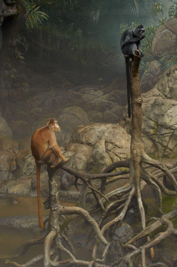 Free Two Monkeys On Trees Royalty Free Stock Image - 1909766