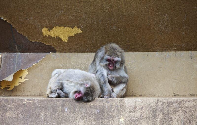 Two monkeys in zoo stock photo