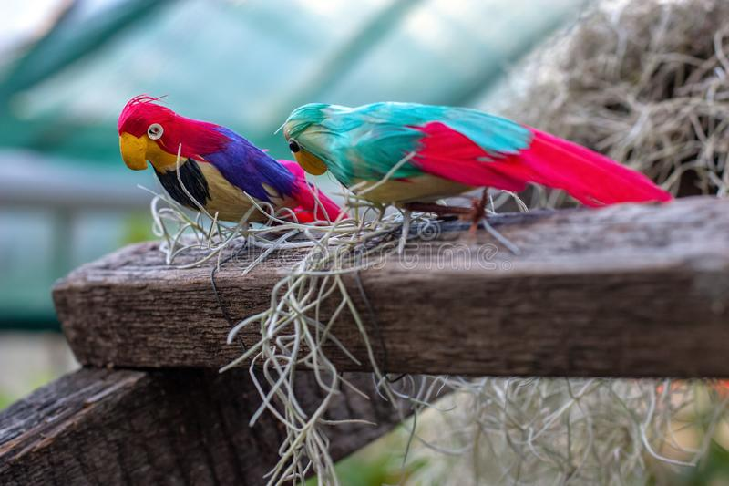 Two multi-colored toy parrots are sitting on a wooden beam stock images