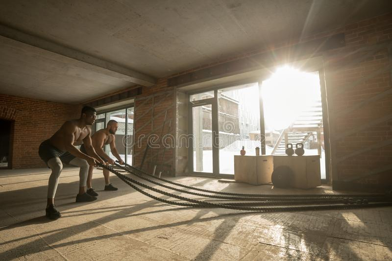 Two multiethnic bare chest sportsmen exercising with battle ropes at the gym. stock photo