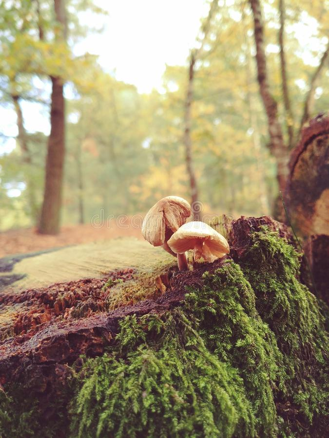 Two Mushrooms With Green Plants stock photos