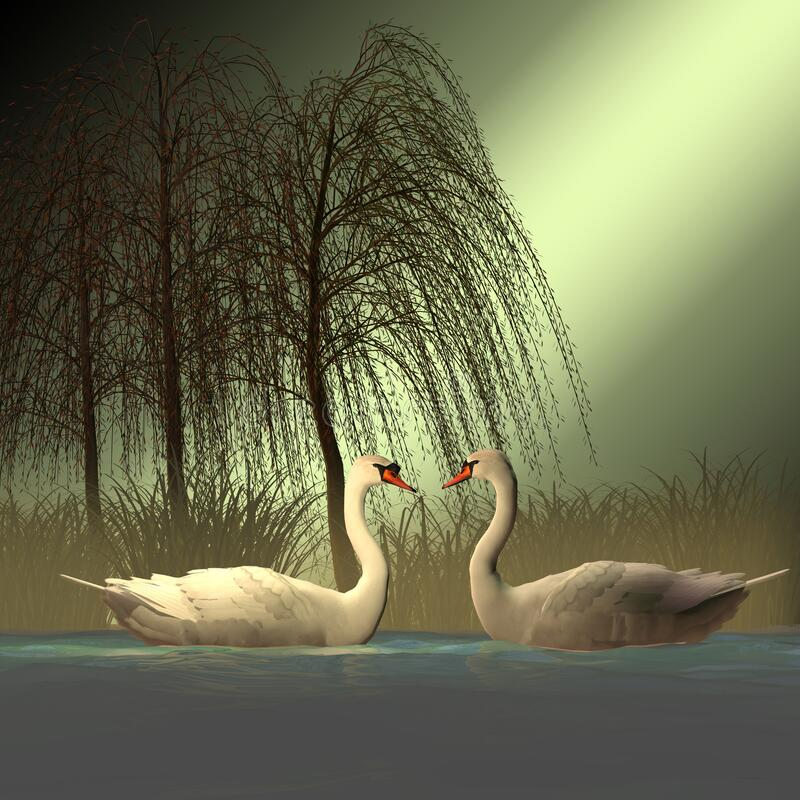 Two Mute Swans royalty free stock photo