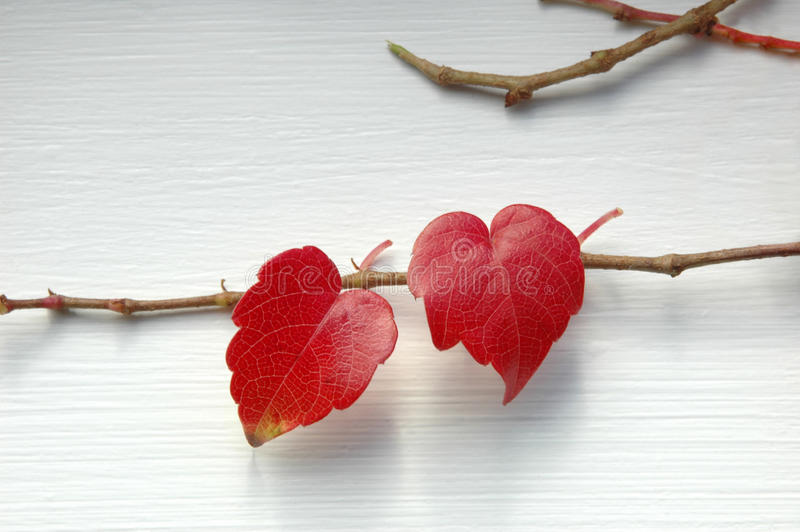 Two natural hearts stock images
