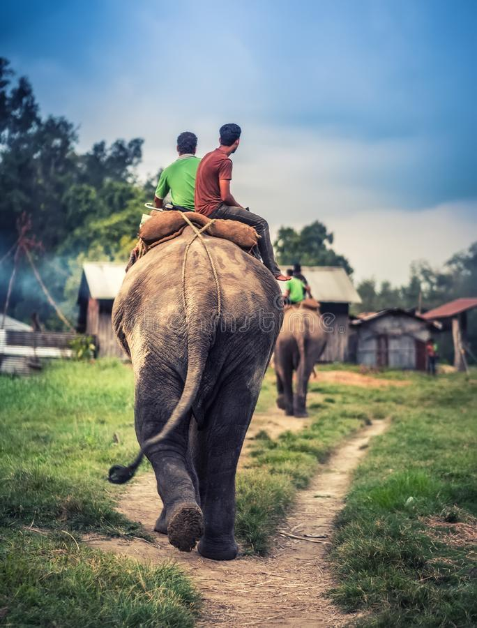 Nepalese people riding on the elephant. Two nepalese men riding on the elephant toward the stable, Nepal royalty free stock image
