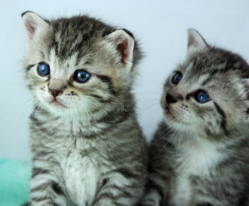 Two newborn kittens stock images